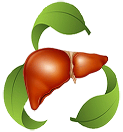 Liver & Detoxification